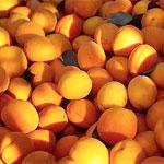 властивості абрикосів