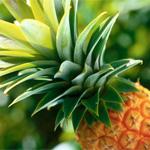 Ананас: склад, властивості і користь ананаса, шкода ананаса