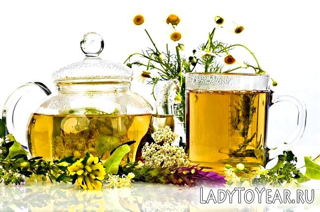 Відвар з різних трав в чайнику і чашці і рослини