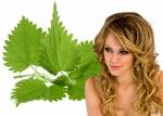 Кропива для волосся відгуки, рецепти, застосування кропиви для волосся