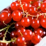 властивості червоної смородини