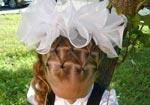 Зачіска на 1 вересня
