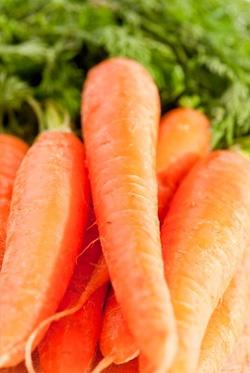 ефірне масло моркви