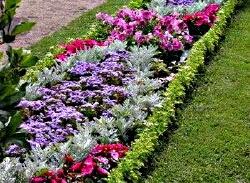 Тому, підбираючи рослини для міксобордера